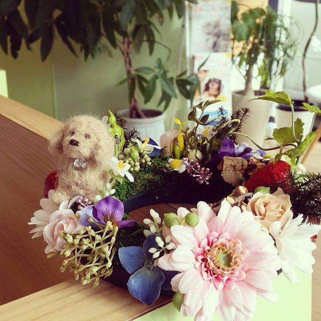 ぽんずです@magnifique.kobe さんです造花のアレンジメントをされている飼い主様がプレゼントしてくれました受付に飾ってますのでぜひ見てくださいね