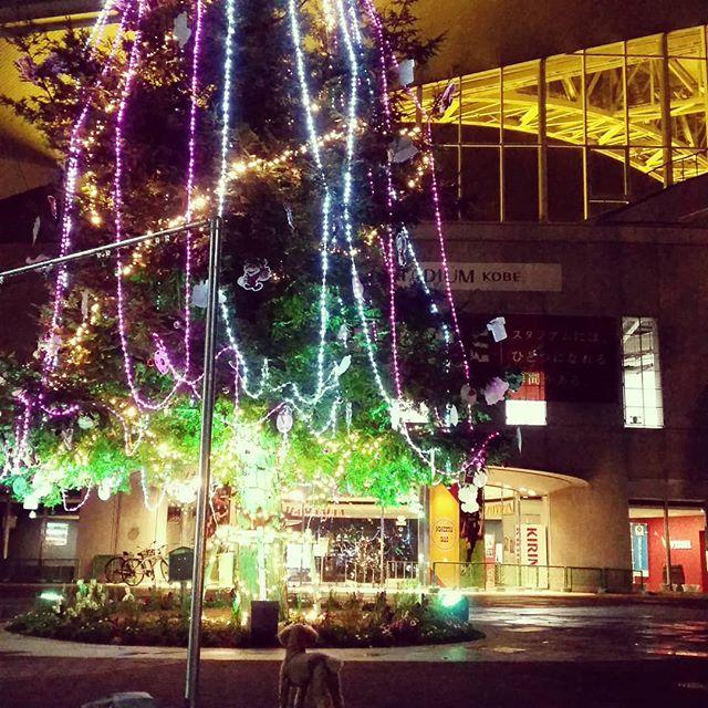 ぽんずですクリスマスですねノエビアスタジアムのツリーがキレイですここはお散歩コースでたくさんのわんちゃんが集まってます