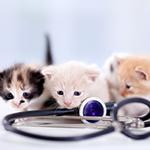 飼い始めに受ける健康診断